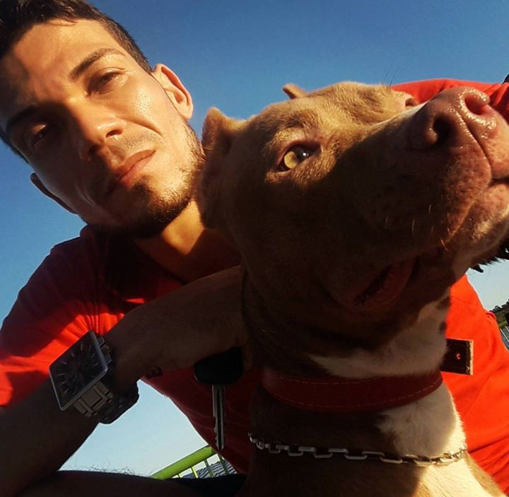 Pit Bull Red